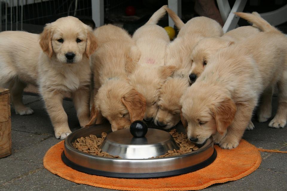 Ωμές Τροφές για Σκύλους (BARF)