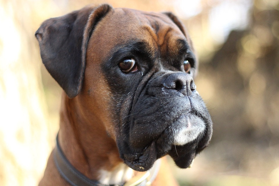 Γιατί η Προσωπικότητα του Σκύλου σου Μοιάζει με τη Δική σου