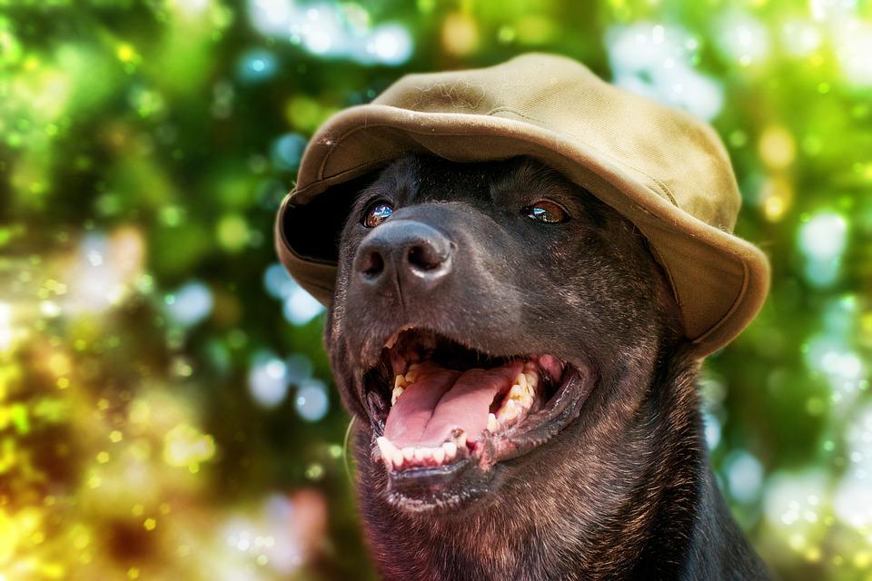 Φυσικές, Βιολογικές και Ολιστικές Τροφές για Σκύλους