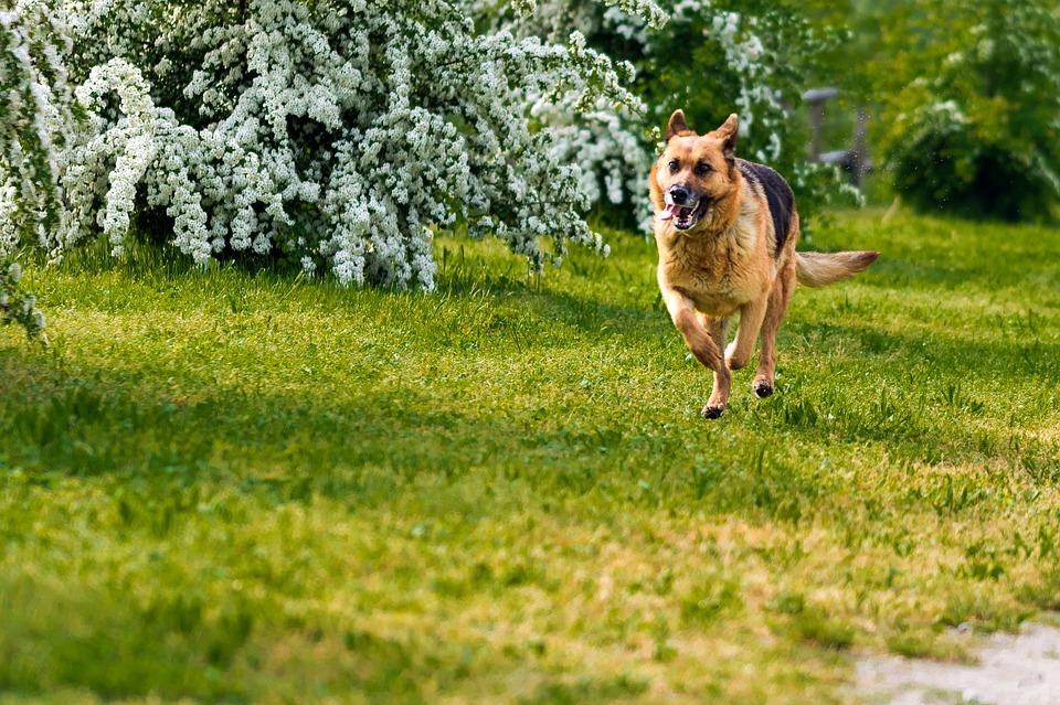 """Οι Σκύλοι Αναγνωρίζουν τους Αναξιόπιστους ή """"Κακούς"""" Ανθρώπους"""