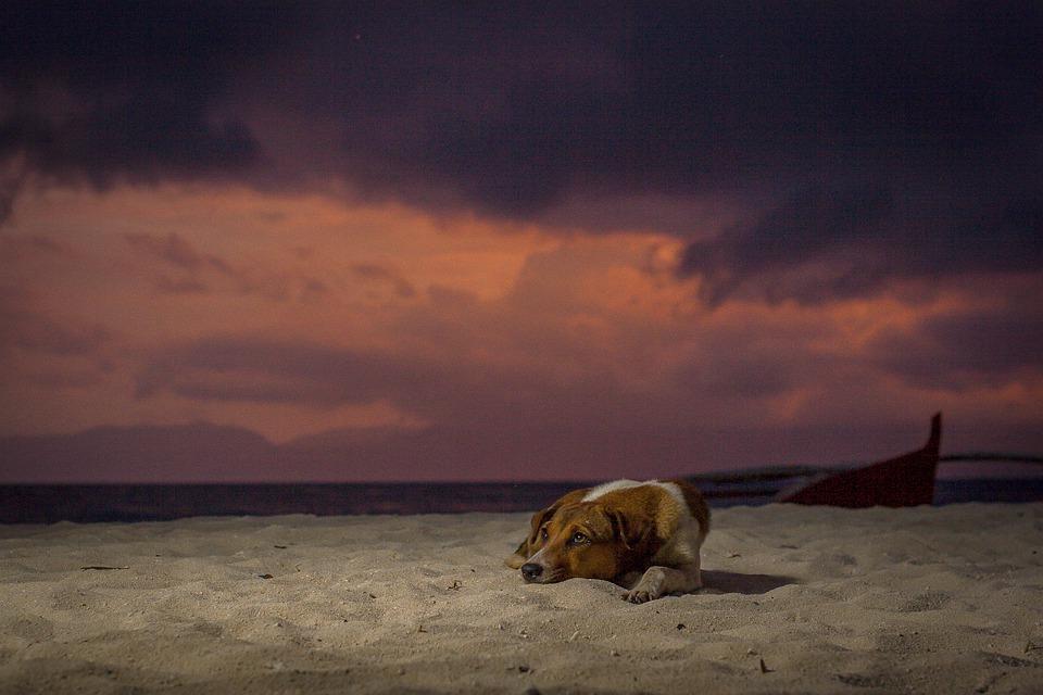 ΚΑΝΕΝΑΣ Αδέσποτος Σκύλος: το Ολλανδικό Παράδειγμα